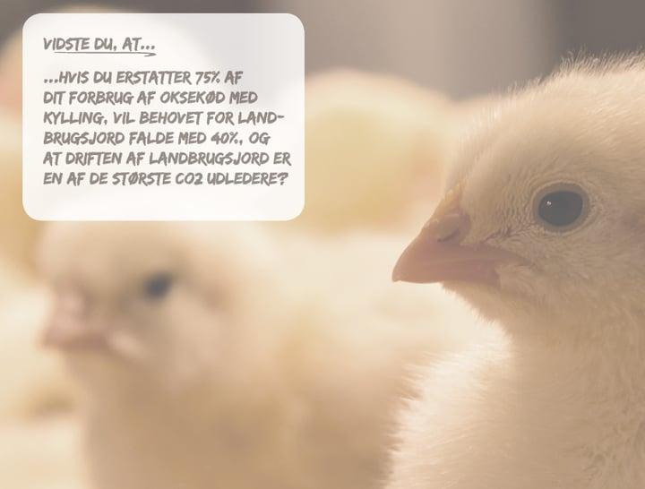 Høns 2 med tekst boks - Euro Poultry